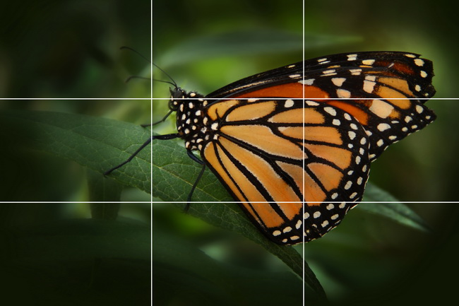 Notice that the butterfly's wings are primarily in the upper right quadrant and the head and upper part of the wings runs along the top line.