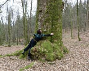 Retrouvailles avec le gros chêne franco-belge de mon enfance
