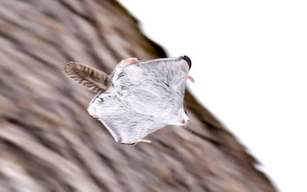 ecureuil-siberie-japon-11-640x401