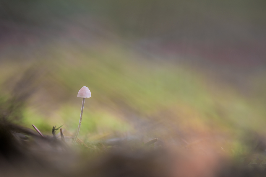 fragile-klein-paddenstoel-sfeer