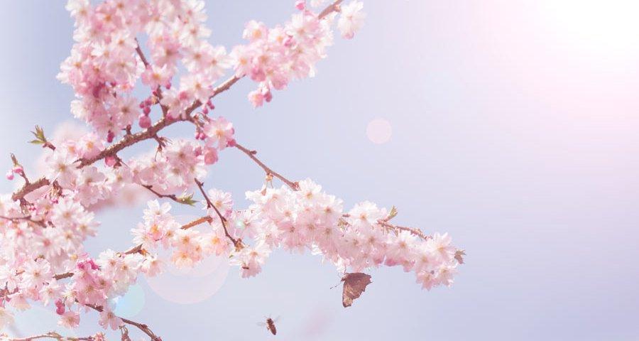 happy- spring-bloesem-blossom