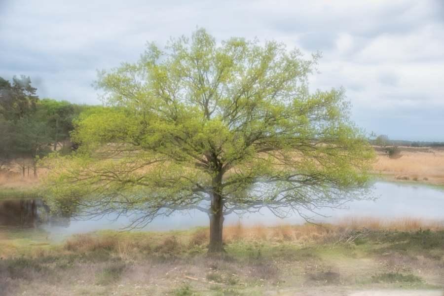 kampina-natuurgebied-heide-dubbele-belichting