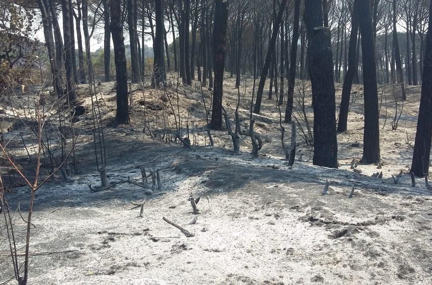 Incendi: la fallimentare gestione dell'emergenza