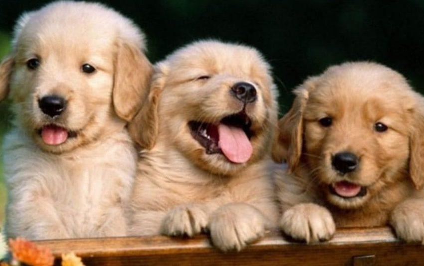 Adotta un cane e microchip gratuito: domenica dedicata agli amici a quattro zampe.