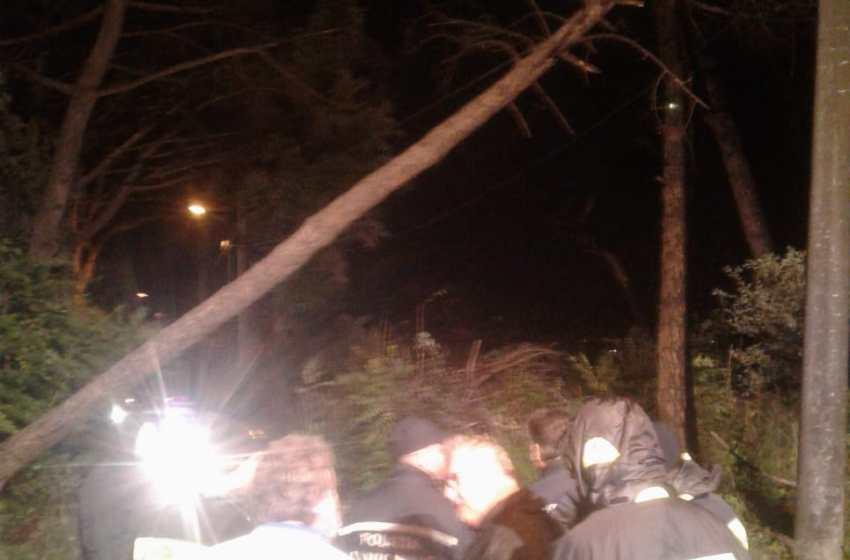 Cinque alberi abbattuti dal vento. Paura per le famiglie che vivono alle falde del Vesuvio