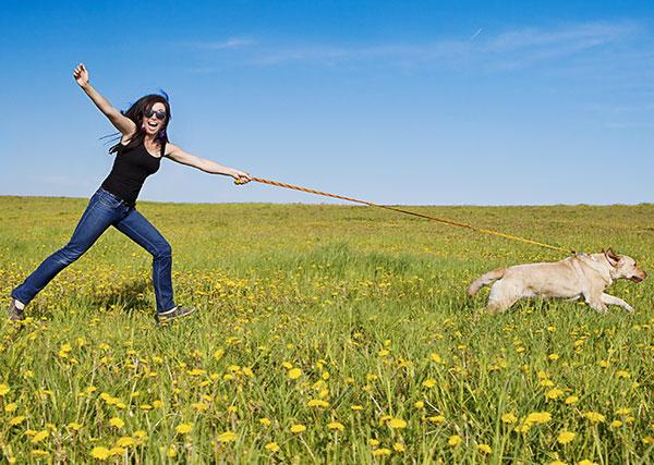 Ecco cosa fare se il vostro cane tira al guinzaglio