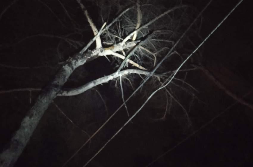 """Crolla albero in via Resina Nuova. SOS dei residenti: """"Aspettiamo i soccorsi"""""""