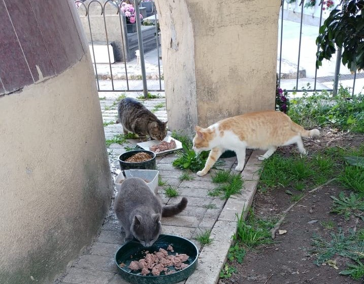 Appello per salvare cento gatti intrappolati nel cimitero chiuso. Commento di Stella Cervasio