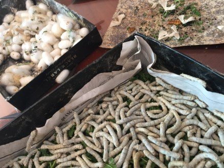 Silk worms in Da Lat, Vietnam