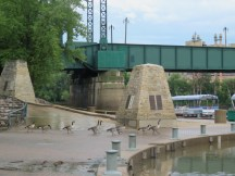 Geese at the Forks