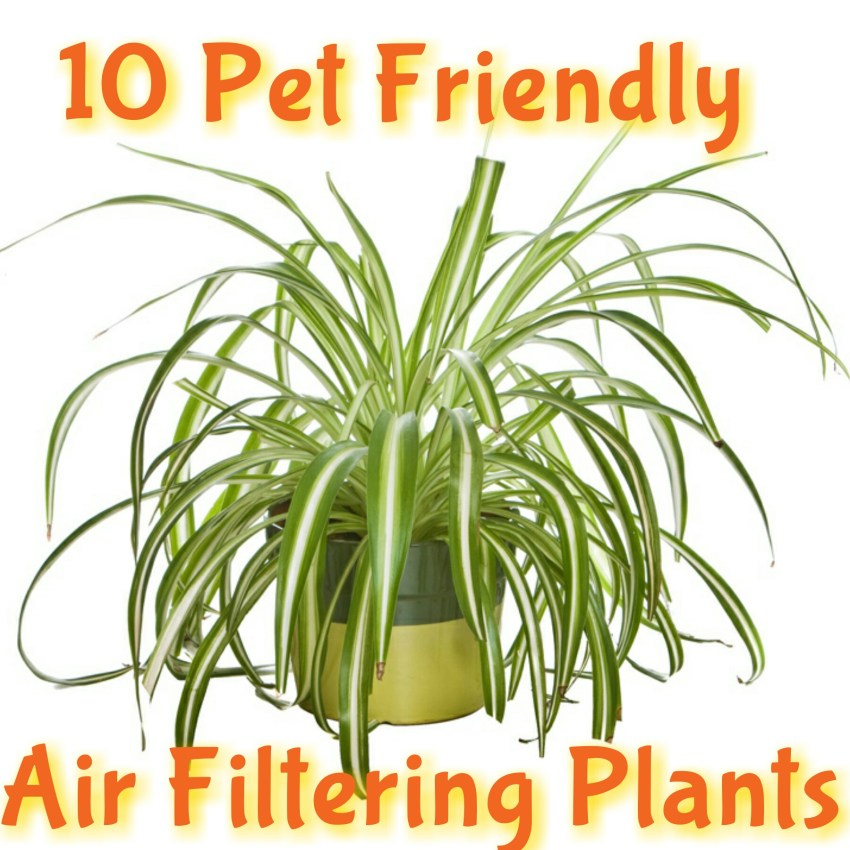 10 Kid & Pet Friendly Air Filtering Plants
