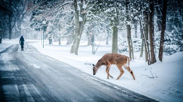 snow-winter-christmas-deer