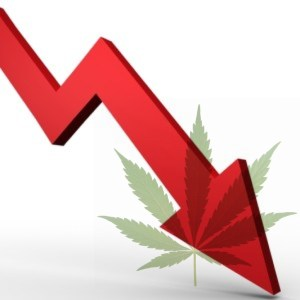 Latest polls show support of marijuana legalization plummeting