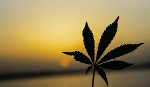 The Puffing Paradox: Why Legalising Marijuana Means it would Cause Fewer Health Problems