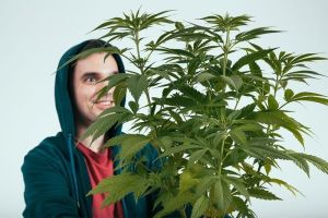 Why Does Weed Makes You Happy? The Science Behind Marijuana's Bliss