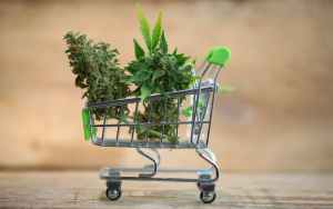 Marijuana sales data reveal Americans bought 67% more weed to survive 2020
