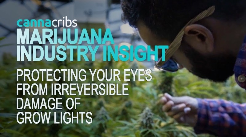 Cannabis Eye Protection in Your Grow Room – Summer Blues Optics Review