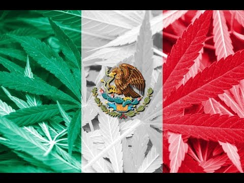 Mexico MUST Legalize Cannabis and Decriminalize Other Drugs Immediately to Win the Drug War