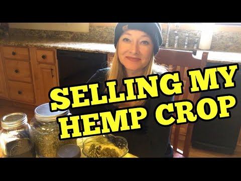 SELLING MY INDUSTRIAL HEMP CROP – Things I considered when selling my industrial hemp crop for CBD
