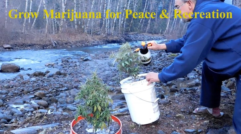 Growing Marijuana for Fun & Relaxation
