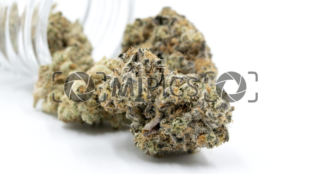 Blue Cheese Autoflower 10000367 download