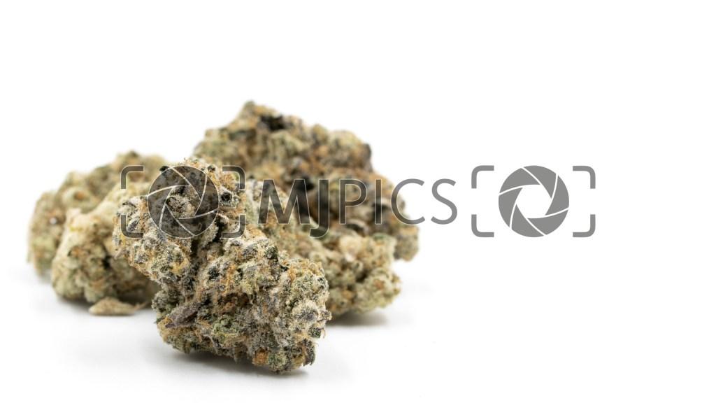 Blue Cheese Autoflower 10000369 download
