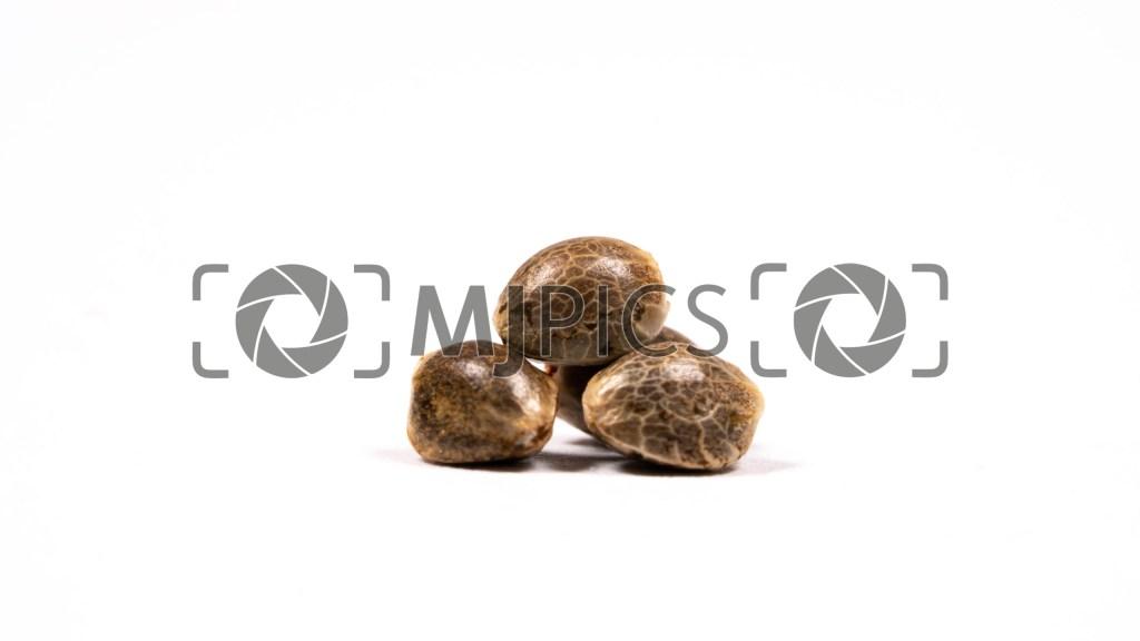 Seeds 10000461 download