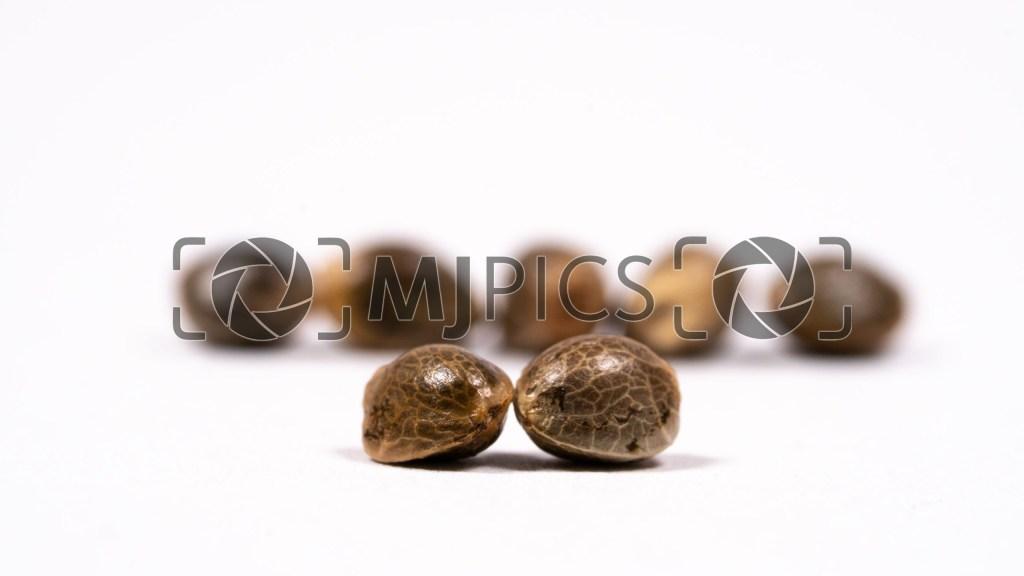 Seeds 10000467 download
