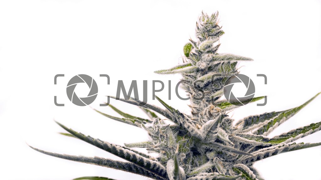 Early Skunk 10000765 download