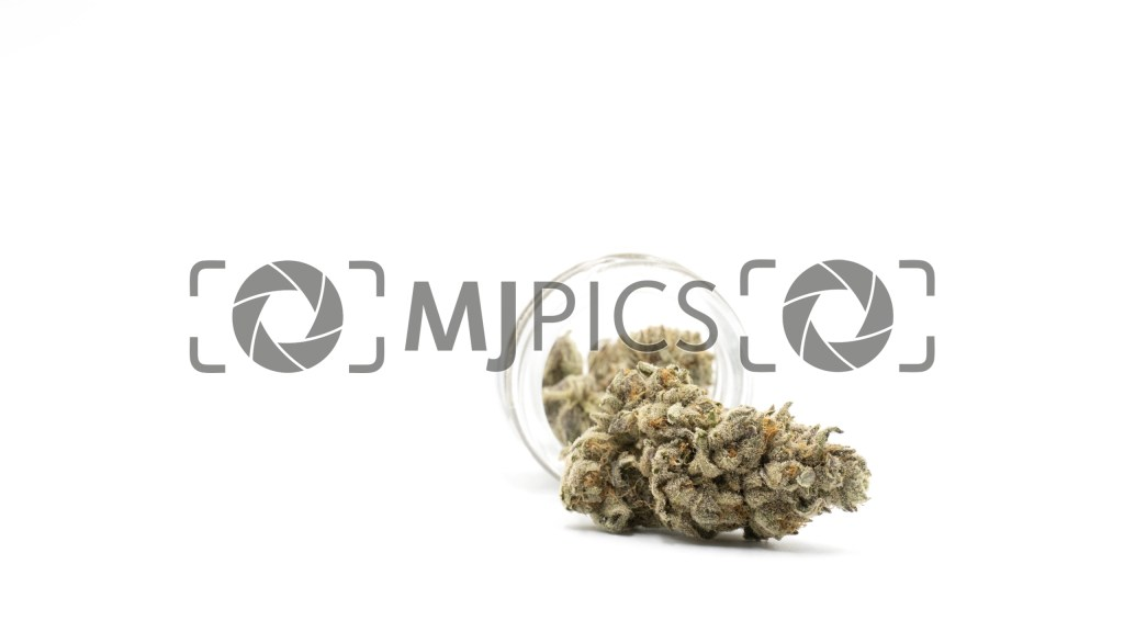Girl Scout Cookies x Cheese 10000782 download
