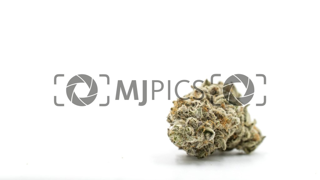 Girl Scout Cookies x Jack Herer 10000784 download