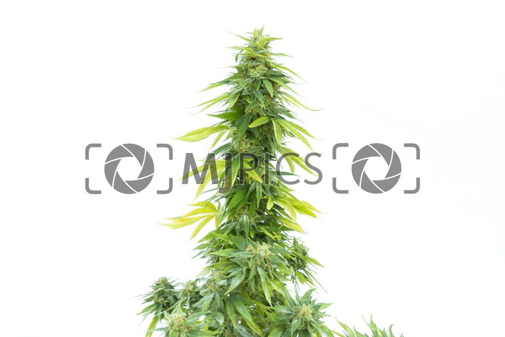 Tangie 10001066 download