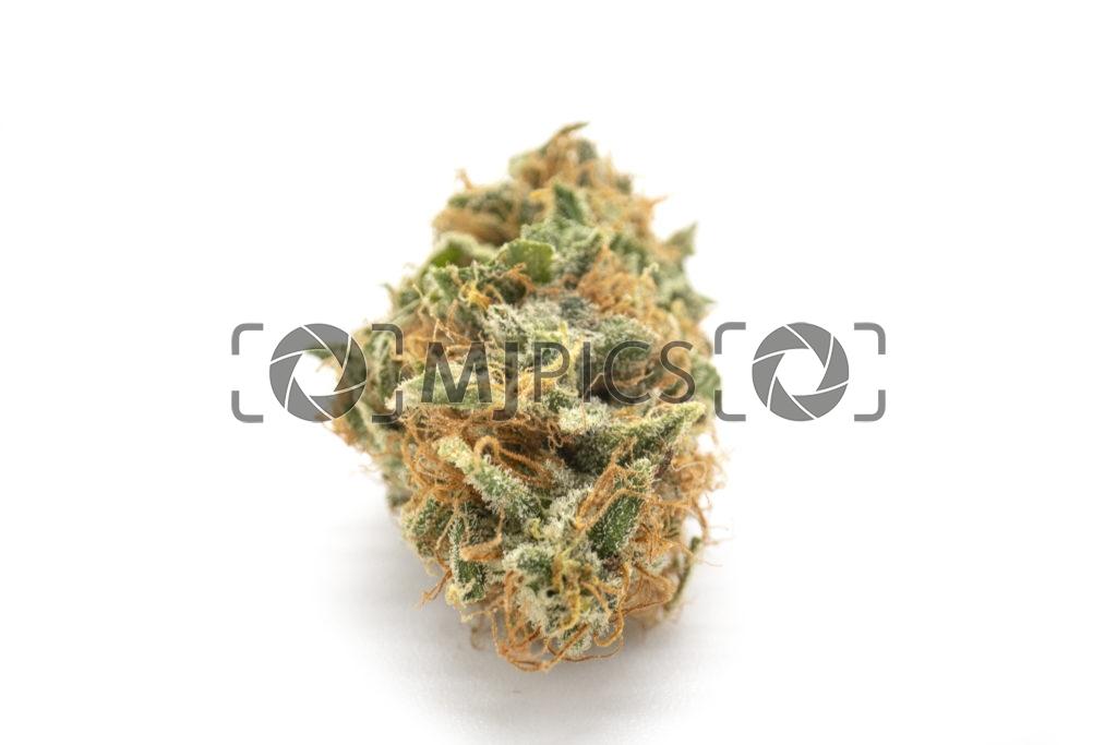 Orange Bud 10001192