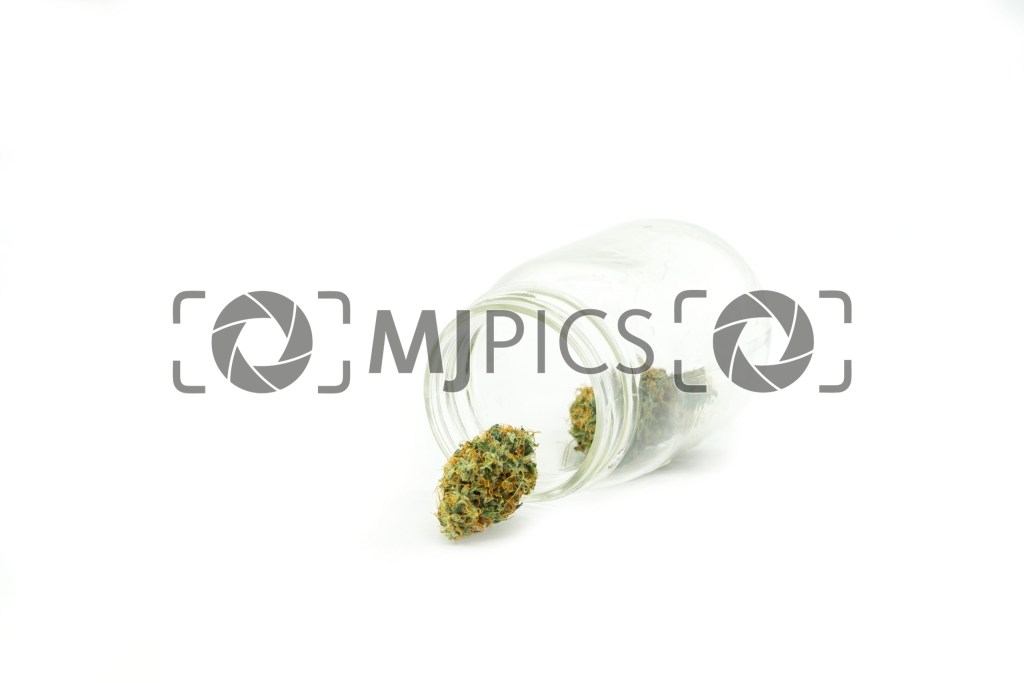 Girl Scout Cookies 10001417