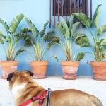 PHOTODIARY #6   La Manga: Hotel + Viajar con mascota