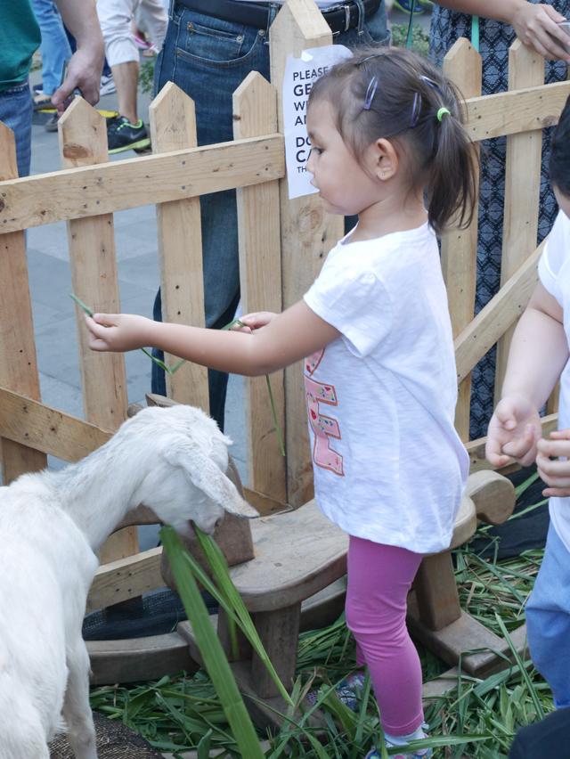 My daughter playing with the goat.