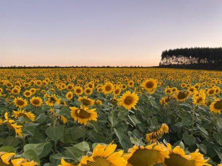 Primavera – Estação das Flores!
