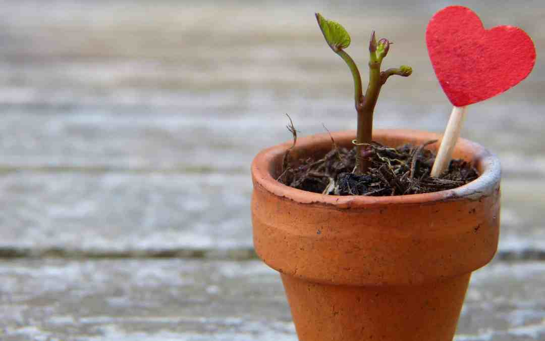 How To Recreate Yourself Through Adversity