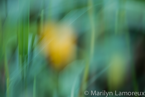 Summer abstract