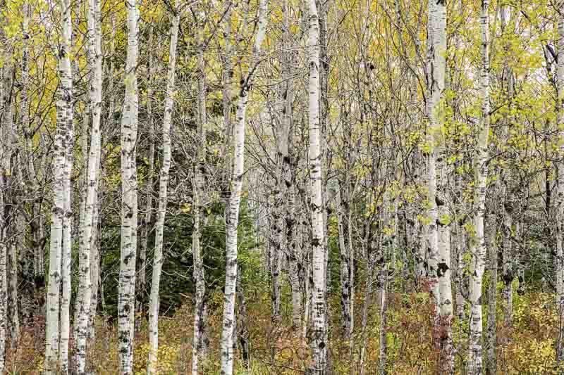 Photo of the Week — Autumn Splendor