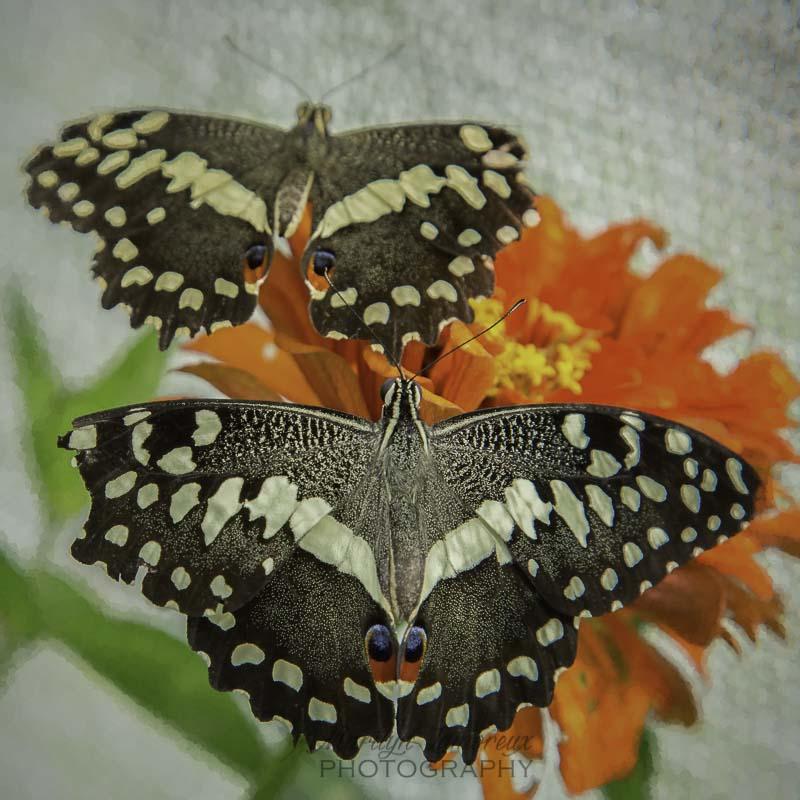 butterfly bliss