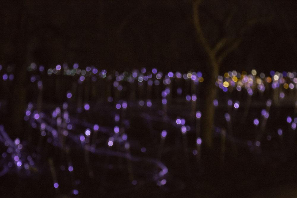 Arboretum Winter Light Show