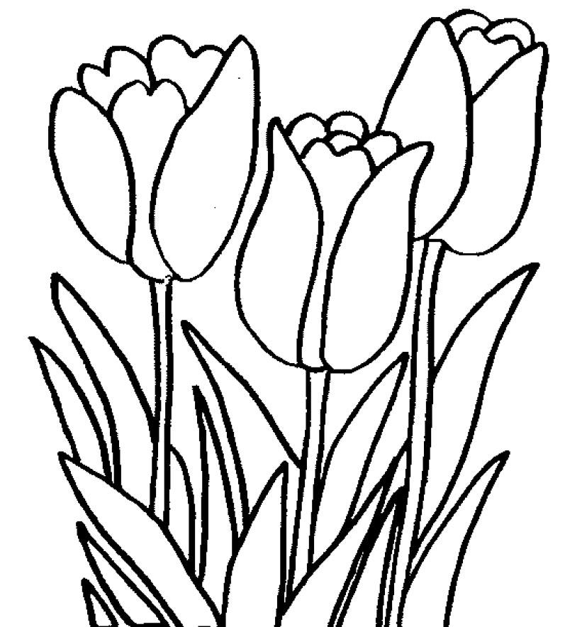 35+ Download Gambar Bunga Untuk Diwarnai