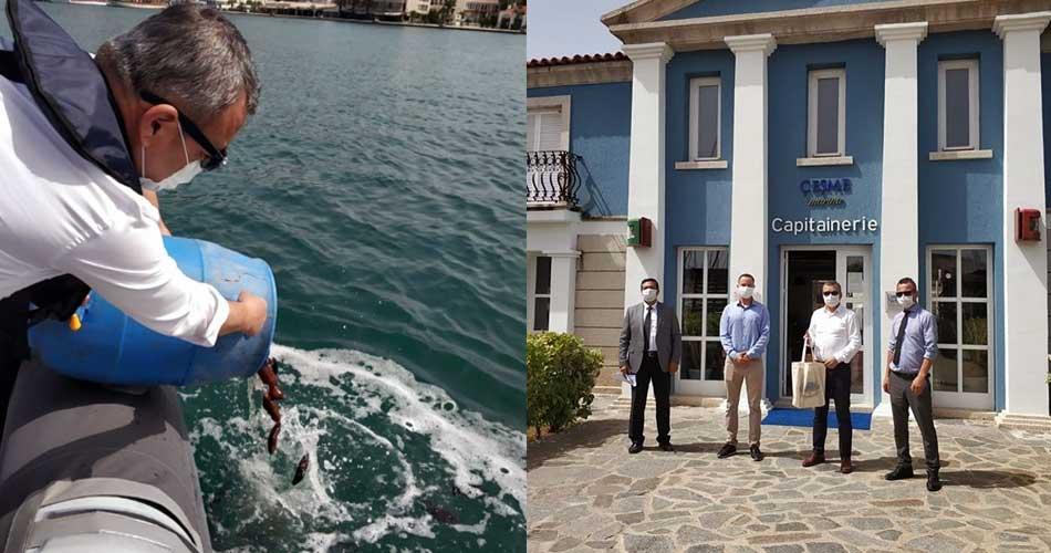Kaçak Avlanan Deniz Patlıcanları Çeşme'de Denize Salıverildi