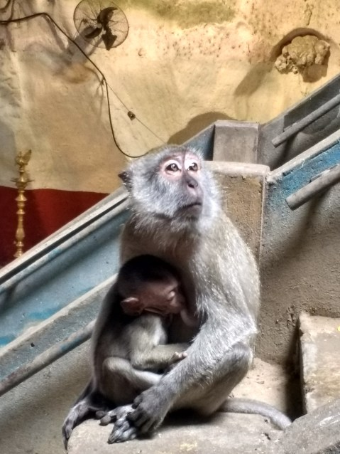 Circle of life at Batu Caves