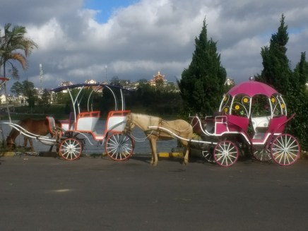 Horse and buggy in Dalat