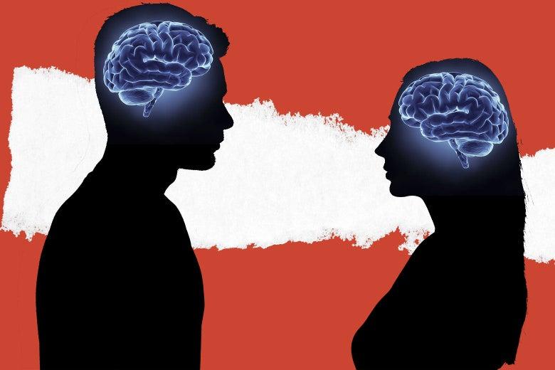 4 χρόνια νεότερος ο γυναικείος από τον ανδρικό εγκέφαλο Διαφορές άνδρα γυναίκας