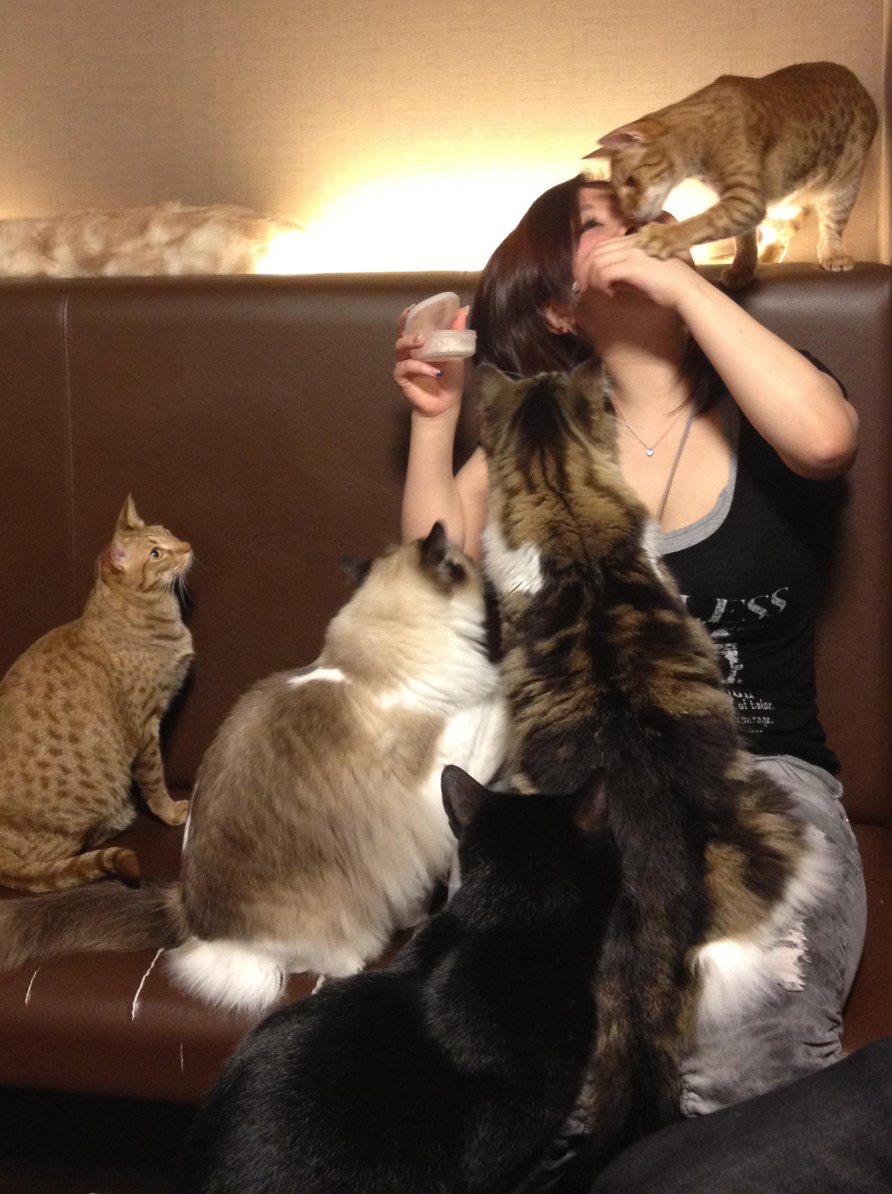 Cat Cafe  marinasjland