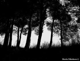 σκοτεινό-δάσος-σκέψεις