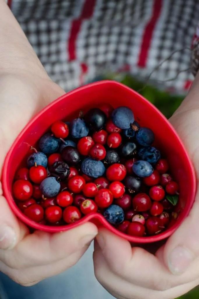 Vilde bær fra de danske heder